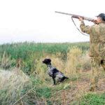 Про охоту и охотоведение