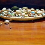 Оология, коллекционирование яиц, изучение птиц