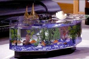 Аквариумное рыбоводство