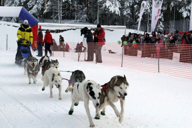 Гонки на собаках, Забытые виды спорта